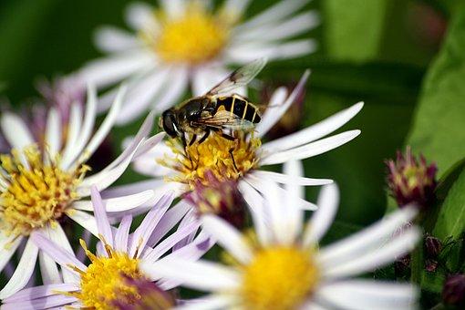 Bee, Walk In The Park, Pollination, Hamburgensien