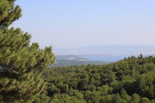 Landscape, Tree, Nature, Mountain, Lake, Trees