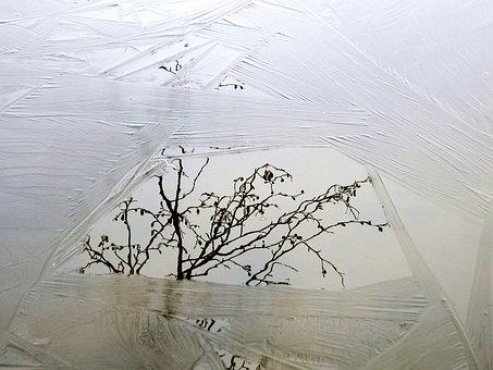 Lake, Ice, Freezing, Reflection, Branch, Trees, Nature