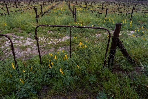 Yellow Flowers, Gate, Dramatic Clouds, Landscape