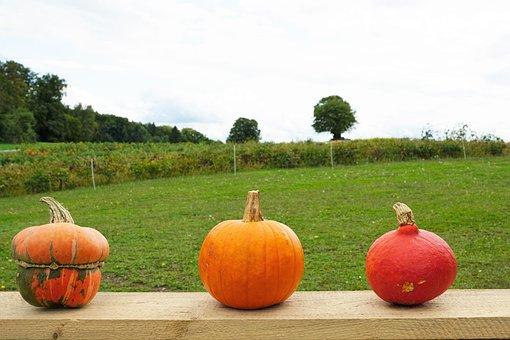 Pumpkin, Soup, Vegetables, Fruit, Garden, Park, Meadow