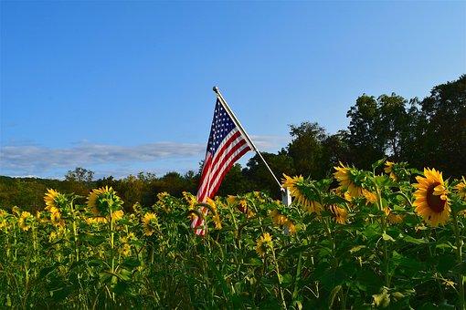Sunflower, Field, Yellow, Nature, Summer Garden, Flower