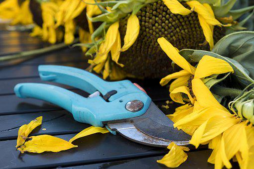 Autumn, Scissors, Pruning Shears, Tool, Gardening