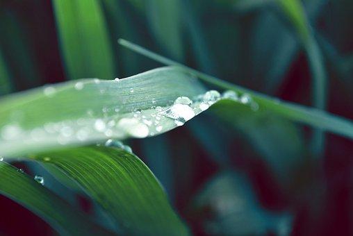 Just Add Water, Plant, Dew, Raindrop, Macro, Green Leaf