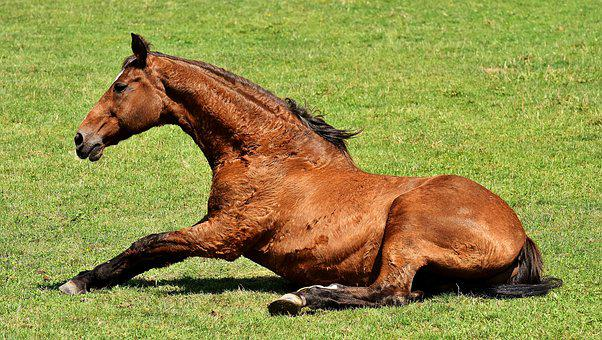 Horse, Coupling, Stand Up, Left Out, Play, Rolling