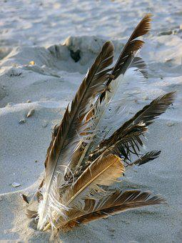 Bird Feather, Sand Beach, Nature, Spring