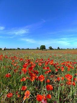 Poppy Field, Sky, Blue, Nice Weather, Blue Sky