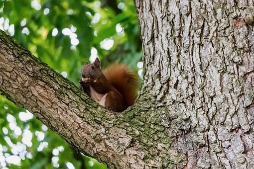 Squirrel, Tree, Aesthetic, Nature, Rodent, Climb