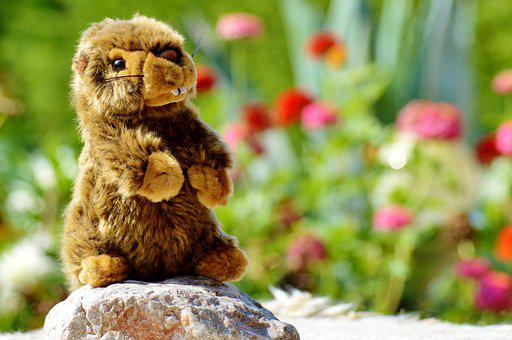 Beaver, Stuffed Animal, Toys, Soft Toy, Teddy Bear
