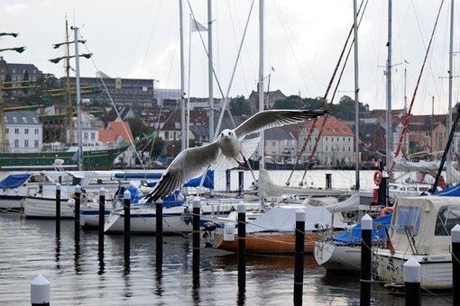 City, Water, Seagull, In Flight, Homes, Flensburg, Bird