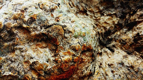 Tree Bark, Wood, Texture, Rough, Old, Lumber