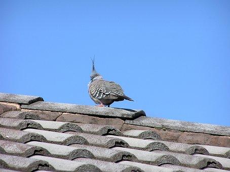 Bird, Roof, Blue Sky, Dove