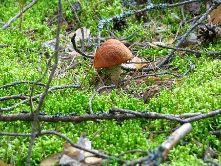 Forest, Hunting, Mushroom, Hat, Summer, Leaves, Nature
