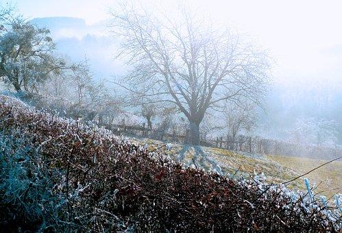 Tree, Winters, Jelly, Frost, Landscape, Field