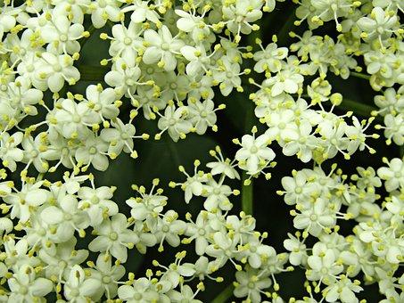 Flower, Jasmine, Nature, Green, Summer, Italy, Bloom