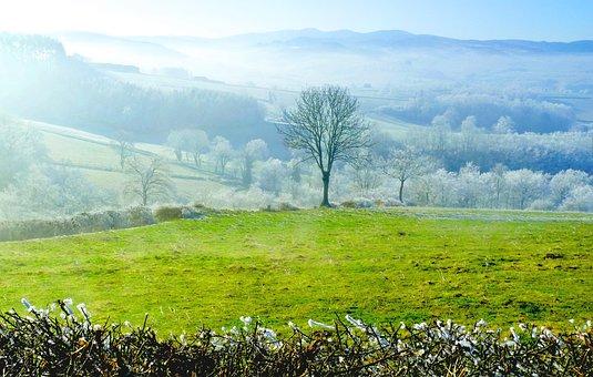 Tree, Winters, Landscape, Nature, Field