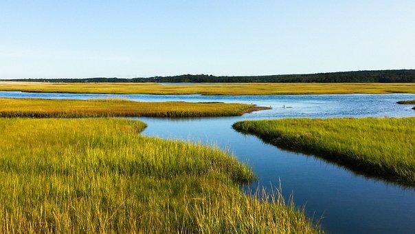 Salt Marsh, Cape Cod, Ocean, Massachusetts, Nature