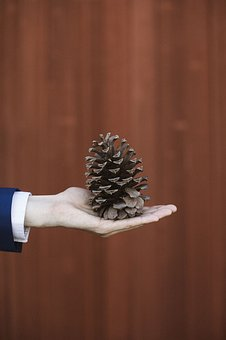 Nature, Pinecone, Branch, Christmas, Decoration, Winter
