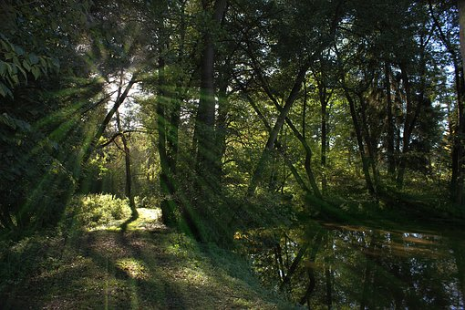 Forest Path, Biotope, Pond, Nature, Water, Pools