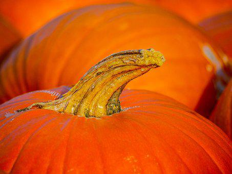 Pumpkin, Stalk, Harvest, Autumn, Halloween, Food