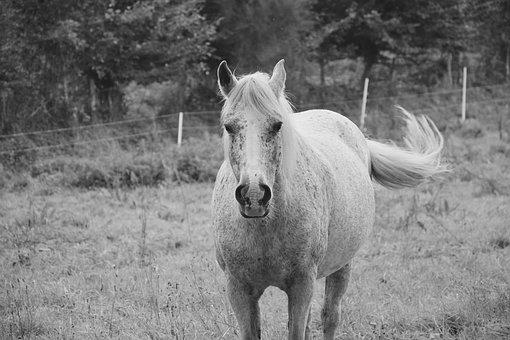 Horse, Mare, Broodmare, Run, Pre, Prairie