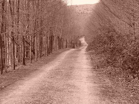 Path, Sepia, Nature, Goierri, Forest, Trail, Landscape