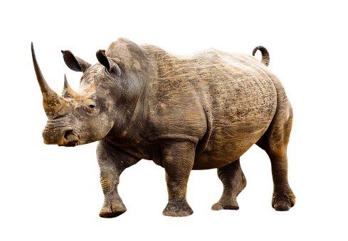 Animal, Wild Animal, Rhino, Africa, Animal World, Horn