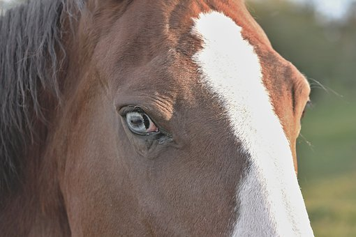 Horse Head, Horse Eye, Eye, Hell, Horse, Animal