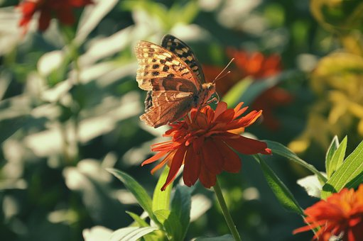 Spring, Flowers, Red, Butterfly, Nature, Plant, Floral