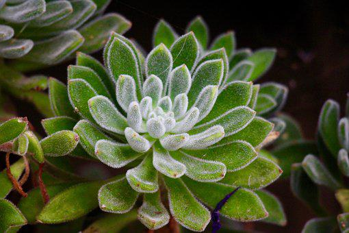 Succulent Plant, Forest, Green, Garden, Nature, Leaves