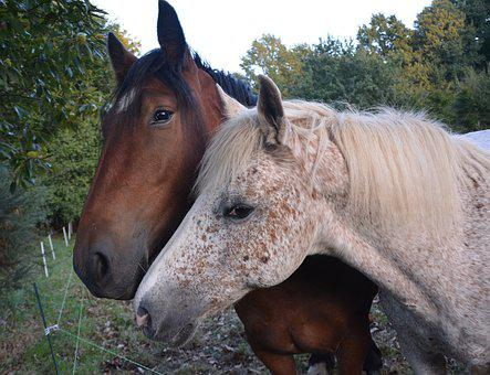 Horses, Complicity, Hug, Tenderness Affection, Horse