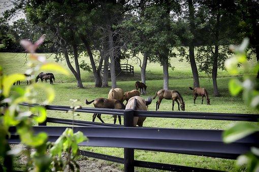 Horse, Farm, Kentucky