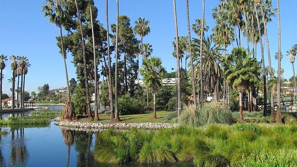 Echo Park, Los Angeles, Lake, Palms, Palm Trees, Palm