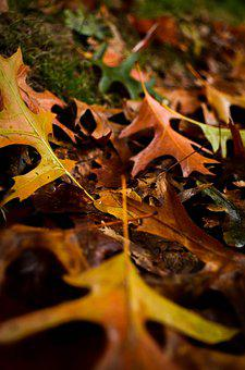 Autumn, Fall, Leaves, Falling Leaves, Nature
