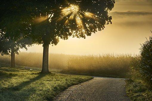 Fog, Autumn, Mood, Landscape, Tree, Meadow, Rising Fog