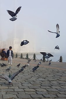 Istanbul, Pigeons, Mosque, Ortakoy, Bosphorus, Street