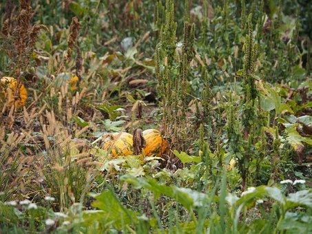 Pumpkin, Harvest, Autumn, Vegetables, Halloween