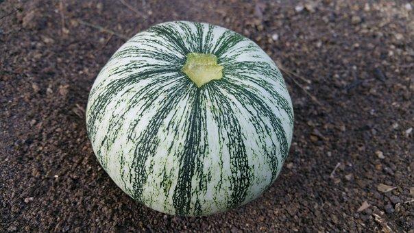 Squash, Round, Pumpkin