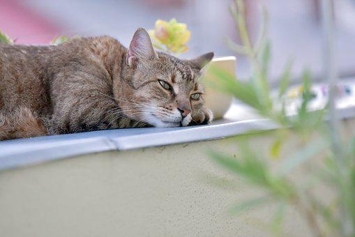 Cat, Rest, Animals, Cute, Tabby, Domestic Cat