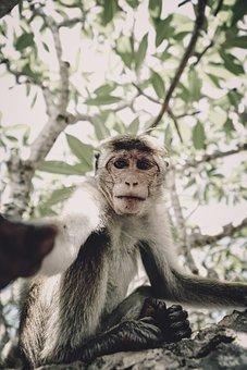 Monkey, Selfie, Tree, Animal