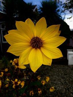 Mellow, Yellow, Sun, Colorful, Natural