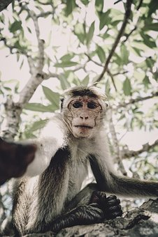 Monkey, Selfie, Tree, Animal