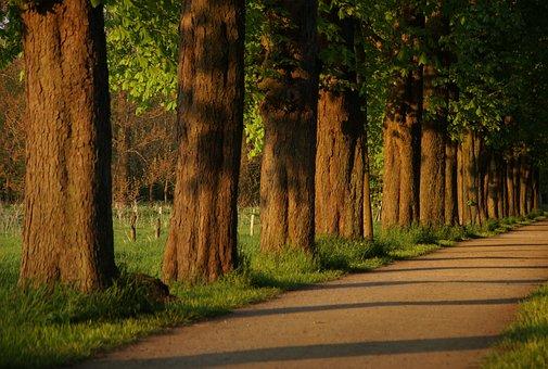 Away, Avenue, Chestnut, Walk, Tree Lined Avenue, Nature