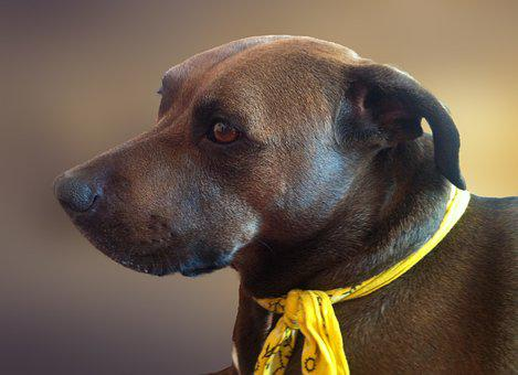 Dog, Doggy, Animal, A Friend Of Man, Snout