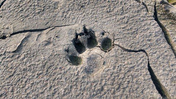 Animal, Footprint, Dog Footprint, Clay