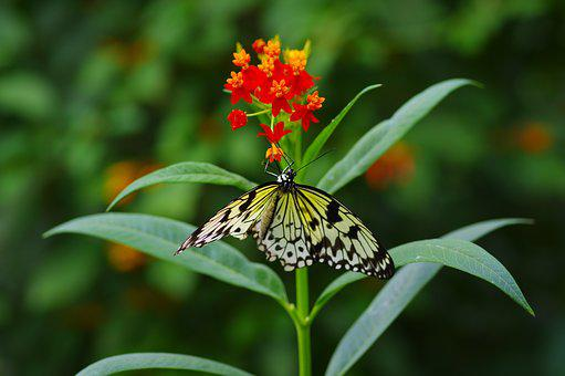 Butterfly, Colorful, Insect, Tropics, Orange, Flower