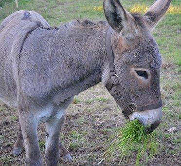 Donkey, Colt, Graze On Grass, Eating Grass Green Grass