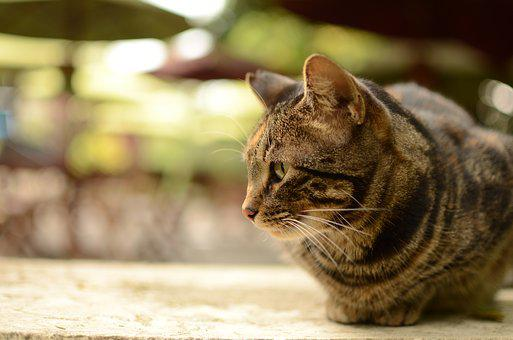 Cat, Feline, Pet, Animal, Pussycat, Animal Home