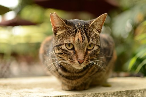 Cat, Eyes, Pet, Green Eyes, Animals, Feline, Animal
