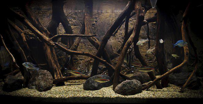 Aquarius, Fish, Fishkeeping, Image, The Bottom Screen